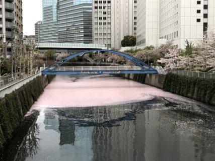 桜シーズンの終焉