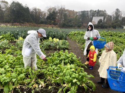 野菜収穫体験@愛彩ファーム(千葉県)